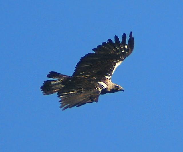 Benfica-Académica: contra a extinção da águia, chamar, chamar