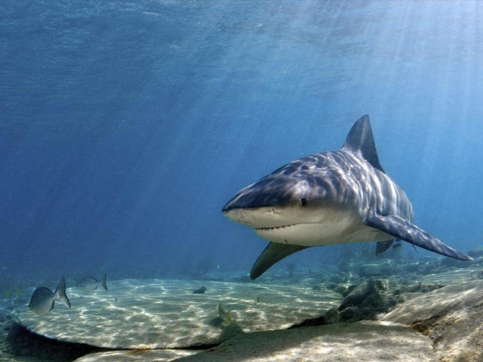 Surfista australiano em coma após ataque de tubarão