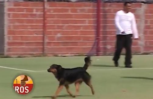 Há um cão goleador (e cabeceador) na Argentina