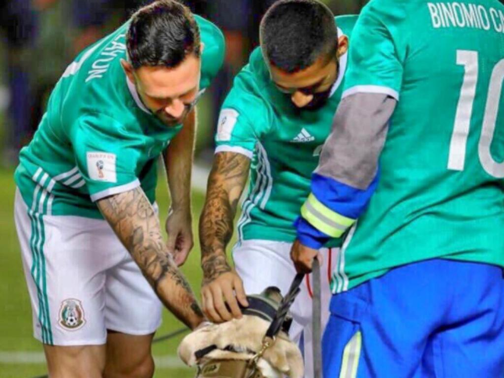 VÍDEO: cadela heroína do sismo no México homenageada pela seleção