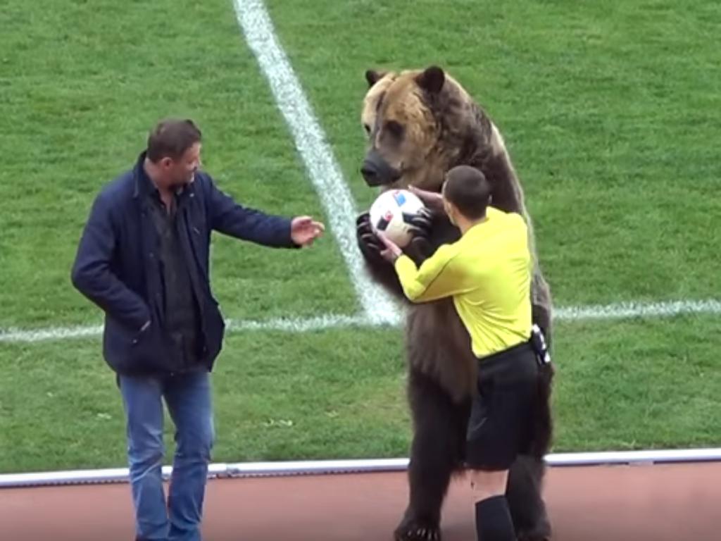VÍDEO: urso anima jogo e entrega bola do jogo ao árbitro