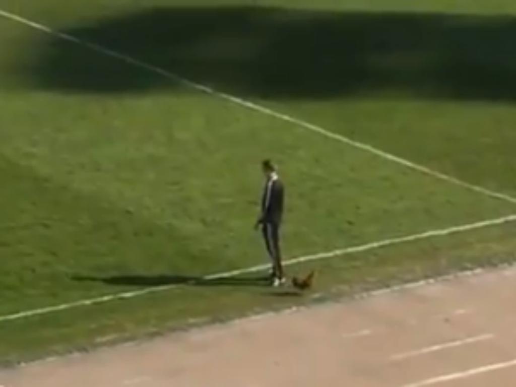 VÍDEO: adepto atira galo para o relvado como protesto contra o treinador